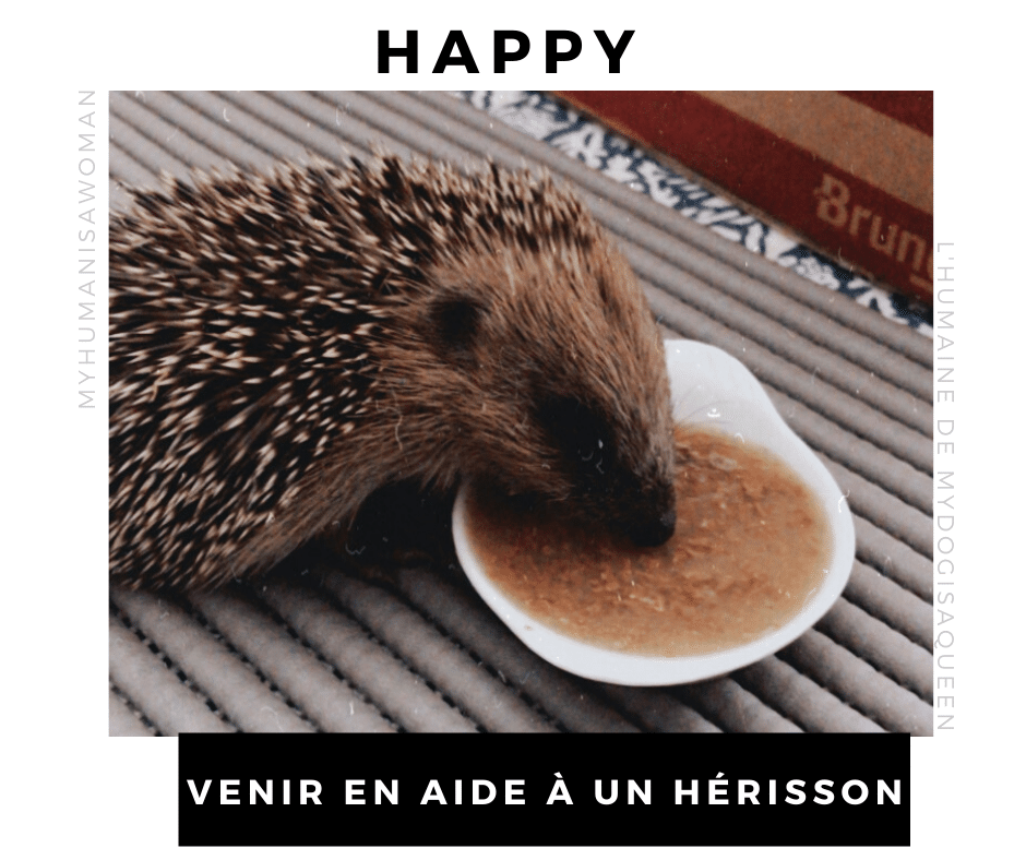 Happy Journal De Bord D Un Bebe Herisson My Dog Is A Queen